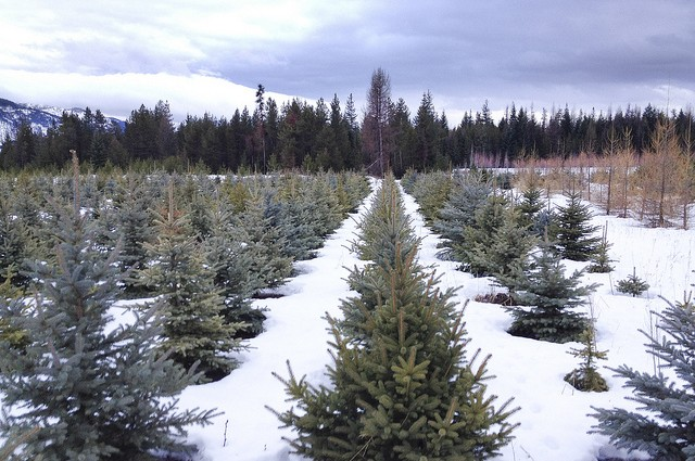 Highland Flats Tree Farm