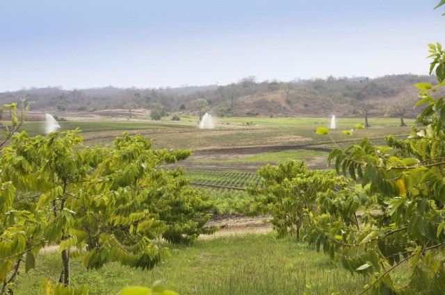 Young Living Ecuador Farm